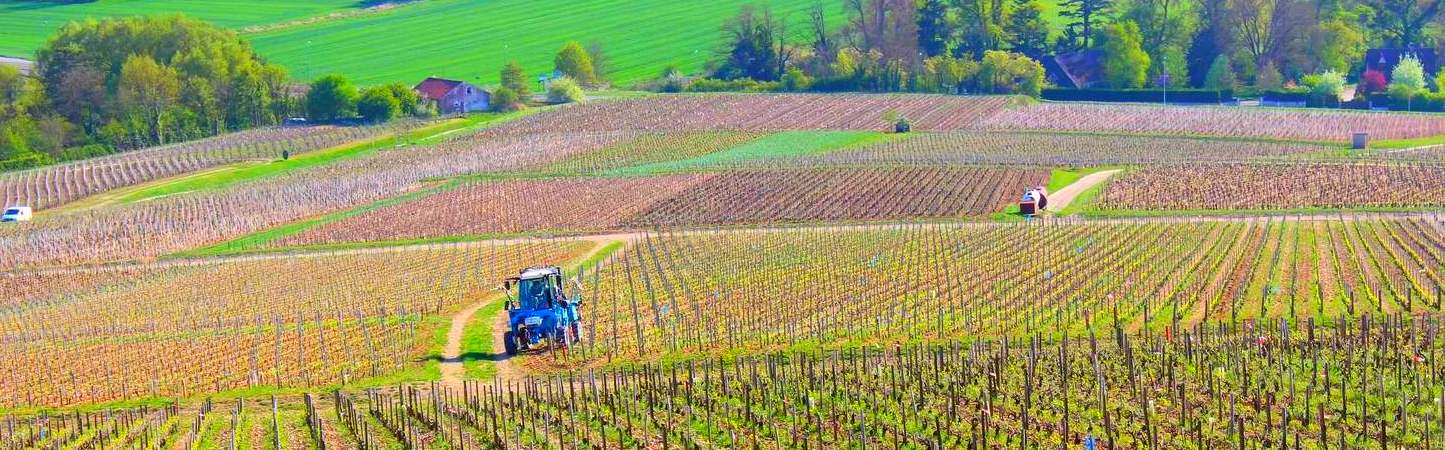 photo-pano-vignes